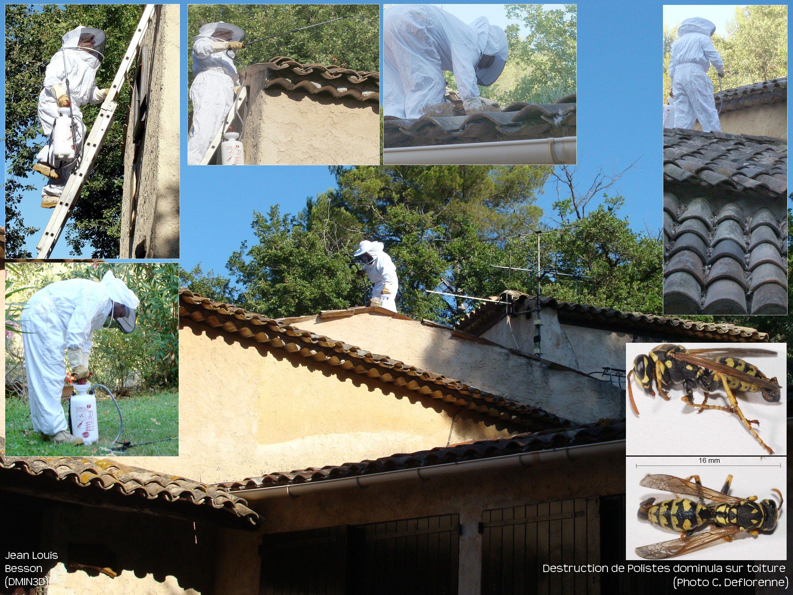 Intervention sur Guêpes polistes toiture